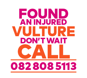 found an injured vulture don't wait call 0828085113