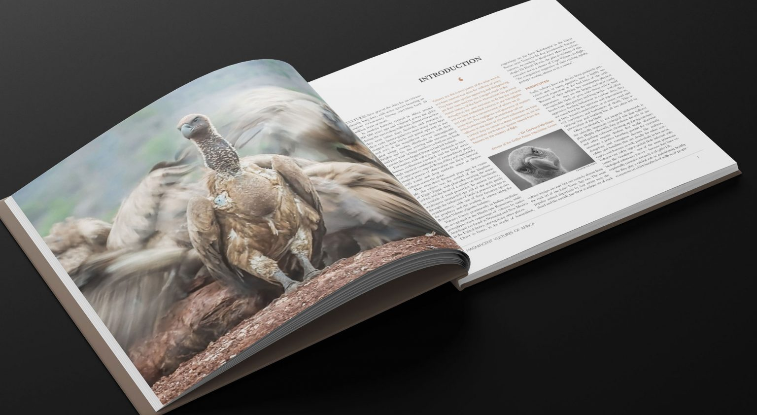Magnificent-Vultures-of-Africa_Inside pages